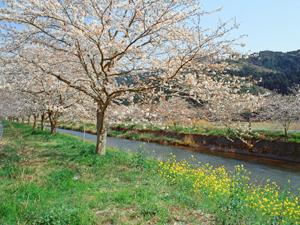那賀川水系のホームページ しずおか河川ナビゲーション